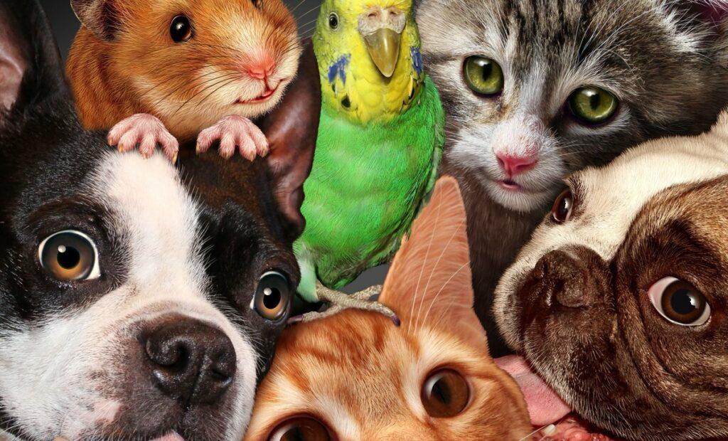 Домашнии животные