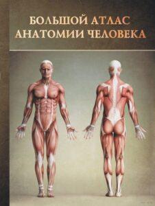 Анатомиеский справочник